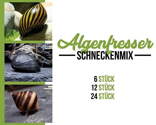 Garnelen Schnecken Mix - Algenfresser - Aquarium Schnecken - Algenvernichter Aquarium Algenbekämpfung, Menge:6 STK.