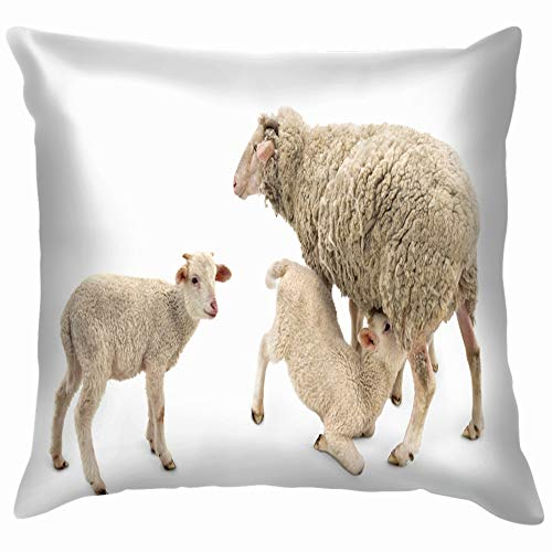 ll Lambs Feeded His Mother Animals Wildlife Agriculture Cotton Throw Pillow Case Cushion Cover Home Office Decorative, Square 18X18 Inch ()