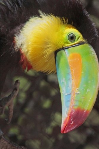 toucan-bird-journal-150-page-lined-notebook-diary