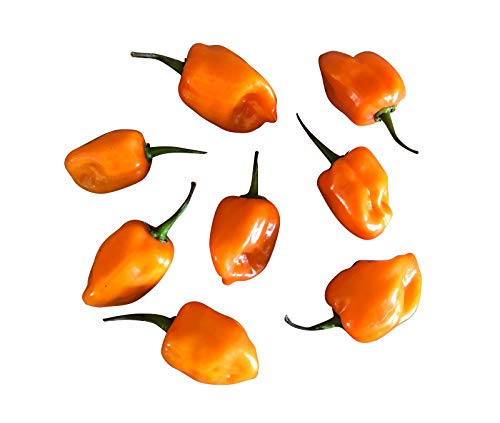 Habanero Orange 10 Samen (Extrem scharfe Chili)