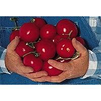 PLAT FIRM Germination Les graines PLATFIRM-Hank Tomate - Rare Heirloom! 20SEEDS! Les cultures énormes à chaque fois!