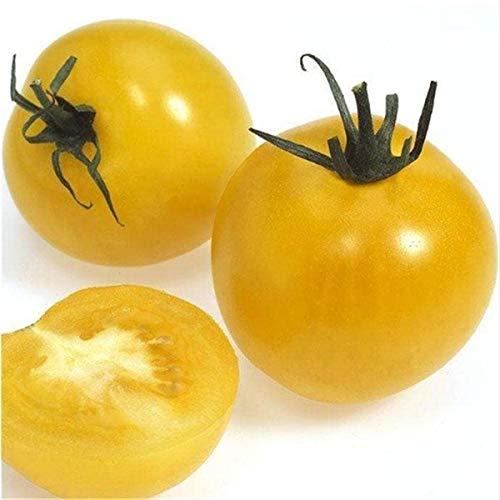 Pinkdose Fruits en pot Légumes cerises tomates bonsaï noir bonsaï princesse noire perle F1 cerise petit 200pcs: 3