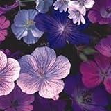 Geranium, Storchschnabel 10 Samen - Frosthart, schöner Mix - Eine der besten Sorten