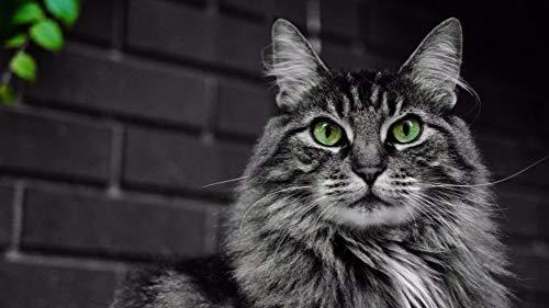 LIWEIXKY DIY Malen Nach Zahlen Kits, Ölgemälde, Malen Nach Zahlen Für Erwachsene Leinwand Home Decor, Flauschige Katze Mit Grünen Augen, Mit Rahmen, 40x50cm
