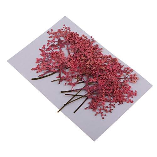 sharprepublic Packung Mit 12 Gemischten Echten Gepressten Getrockneten Blumen Natürliche Blumen Verzierungen DIY Machen Karte Handgemachten Schmuck Harz Handwerk Sc - Rosa, 8-11 cm (Getrockneten Gepressten Blumen)