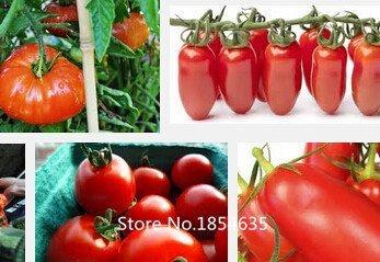 e top Sale Selten in Non-GMO Tomatensamen, jeder Satz, 200 Seed and Delicious Gemüsesamen Shanghai, China Bons ()