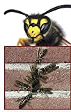 100er Set Stoßfugenlüfter Bienenbeisser Fugenlüfter 70mm rostfrei aus Edelstahl