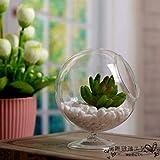 Jarrón de Cristal de borosilicato Transparente, Redondo, para Plantas hidropónicas