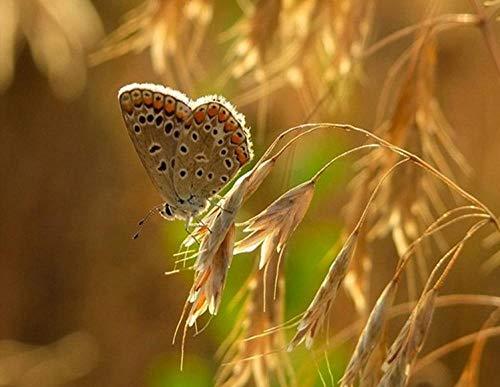 MZOHQN Diamant Malerei 5D Volle DIY Kreuzstich Golden Crop Butterfly Mosaik Malerei Handarbeit Handwerk 3D Bild Stickerei Kits - Butterfly Crop