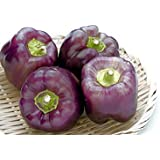 Portal Cool Las semillas del paquete: 40 Con el seguimiento: Belleza púrpura pimienta dulce vegetales Cargas De Mercado de Frutas y Home Garden