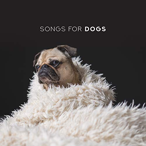 Songs for Dogs - Relaxing Music for Pets, Calming Melodies for Deeper Sleep, Pet Relaxation, Stress Relief