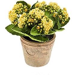 artplants Künstliche Kalanchoe FAJRA mit Blüten, gelb, 22 cm - Deko Blume/Kunst Pflanze