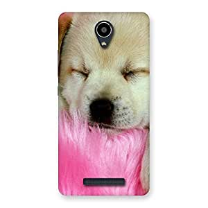 NEO WORLD Remarkable Sleeping Pup Back Case Cover for Redmi Note 2