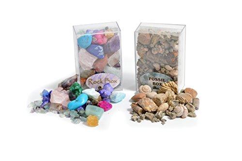 Conjunto de Caja de Fósiles y Rocas