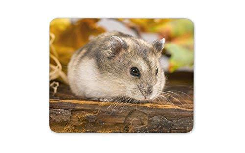 Nette Feld-Maus Mauspad Pad - Mäuse Nager Hamster-Kind-Geschenk PC Computer # 8500 (Für Kinder Maus-pad)