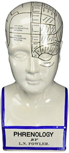 Progettazione Toscano SP020 Skull statua in porcellana frenologia