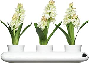 Sagaform - Pot à Herbes Aromatiques Triple