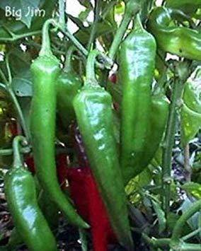 PLAT FIRM Freh Non GMO Erbstück Big Jim Hot Pepper NuMex 50 Samen hohe Ertrag von Huge Pfeffer