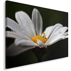 Feeby Frames Cuadro en Lienzo, Cuadro Impresión, Cuadro Decoración, Canvas 80x120 cm, DE Flor, Margarita, Macro, Blanco, Naranja