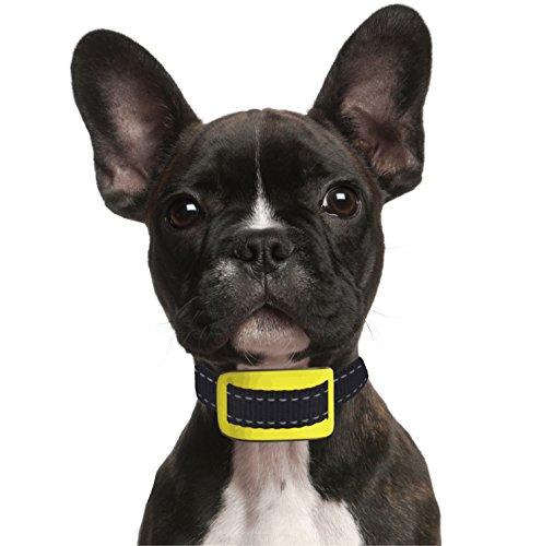 our-k9-yellow-anti-bark-collar-small-dog-bark-collar-sound-and-vibration-pain-free-anti-bark-collar