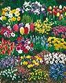 """185 Blumenzwiebeln """"Zauberhafter Lenz"""", Komplett-Set"""