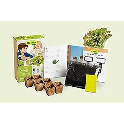 Mini Kit de lechuga maravilla del verano