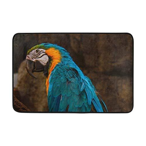 Jhonangel Teppich Papagei Macaw Vogel Blaue Fußmatte Innenaußeneingang Bodenmatte Badezimmer 23,6 X 15,7 Zoll