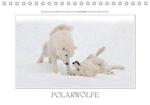 Emotionale Momente: Polarwölfe. / CH-Version (Tischkalender 2019 DIN A5 quer)