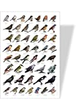Achat nature - poster nature oiseau