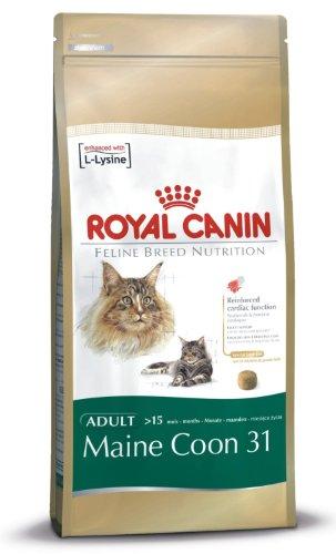 Royal Canin Chat Maine Coon 31Adulte de croquettes pour chat de équilibré et complet pour chat 2kg