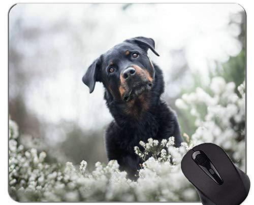 Mousemat-Mauspads, Hund Rottweiler - Genähte Kanten