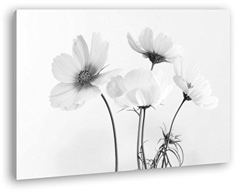 deyoli schöne Violette Blume Effekt: Schwarz/Weiß im Format: 100x70 als Leinwandbild, Motiv fertig gerahmt auf Echtholzrahmen, Hochwertiger Digitaldruck mit Rahmen, Kein Poster oder Plakat - Das Leben Auf Dem Land 100% Grünen