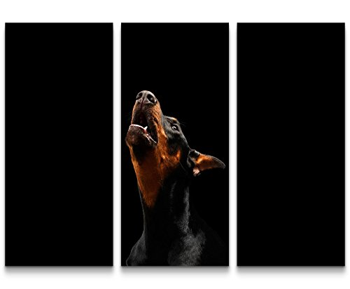 Paul Sinus Art Leinwandbilder | Bilder Leinwand 130x90cm Doberman Pinscher - Portrait (Bilder Pinscher Doberman)