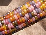 PLAT FIRM GERMINATIONSAMEN: Glass Gem Corn Heritage Variety