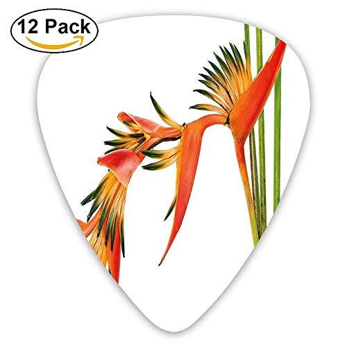 Blumen auf Niederlassung bunte Natur-Dschungel-Garten-Thema-Gitarren-Auswahl 12 / Satz Für E-Gitarre, Akustikgitarre, Mandoline und Bass ()