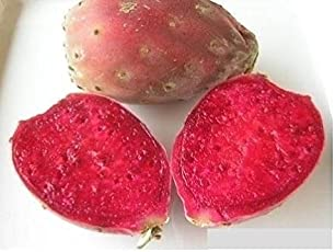 Aiden Gardens VERY RARE Super Dwarf Low Prickly Pear Cactus Opuntia humifusa Dragon Fruit 10 seeds