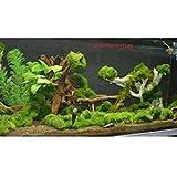 Algen im Miniteich oder im Aquarium oder im Gartenteich? Die Lösung - das Unterwassergras gegen Algen