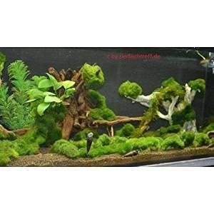Algen im Aquarium? hier die Lösung: Unterwasserrasen, Unterwassergras, Algenkiller, Sauerstoffproduzent und Wasserklärer