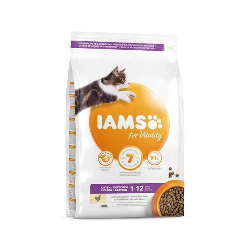 IAMS Kätzchen (1) - 10kg