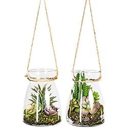 Homefinity 2er Set künstliche Sukkulentenarrangement 16cm grün in konischen Glasgefäß mit Hänger
