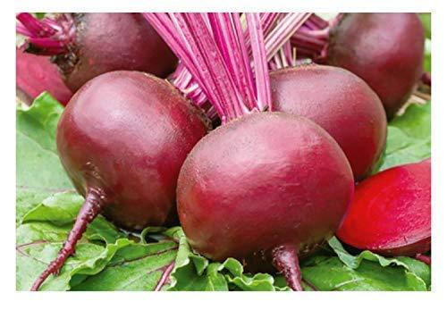 250x Rote Rübe Ägyptische Plattrunde EKO Gemüsesamen Saatgut Samen Frisch K278