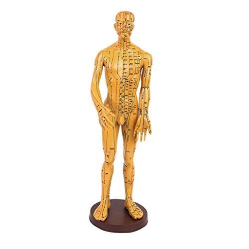 FITYLE Akupunktur Puppen - Akupunktur-Figuren - Meridianpuppen - (Mann/Frau) Muster Auswahl - Männlich 2