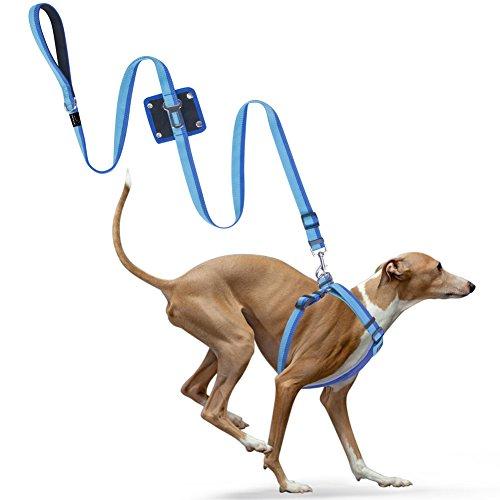 hundeleine-auto-sicherheitsgeschirr-petbaba-reflektierend-verstellbar-nylon-hundegurt-adapter-fur-hu