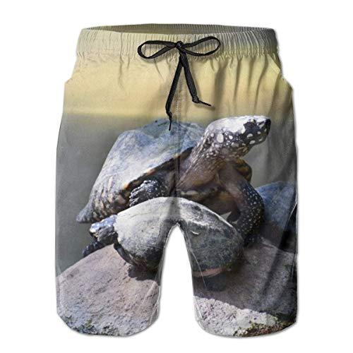 Men's Swim Trunks Animal Daylight Pet Turtle Surfing Beach Board Shorts Swimwear Large