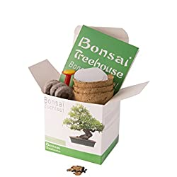 Bonsai züchten leicht gemacht! Alles was du benötigst um deinen eigenen Baum wachsen zu lassen in einer Box. Das besondere Geschenkset