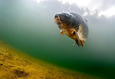 WaterWolf Underwater Bottom Fishing Kit by WaterWolf