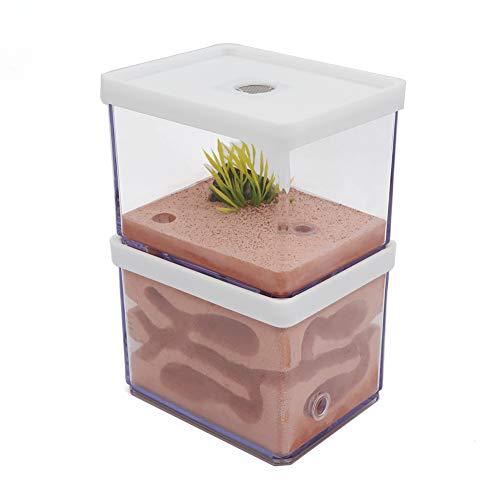 VERY100 Ant Farm Ameisennest Ameisenfarm Mit Künstlich Landschaft Mini-Welt der Ameisen Für Kinder Geschenk (L) -