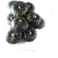 10 Hokkaido Shokichi Green - Kleiner, japanischer Kürbis - Dekokürbis ALS Herbstdeko zu Halloween - auch Speisekürbis