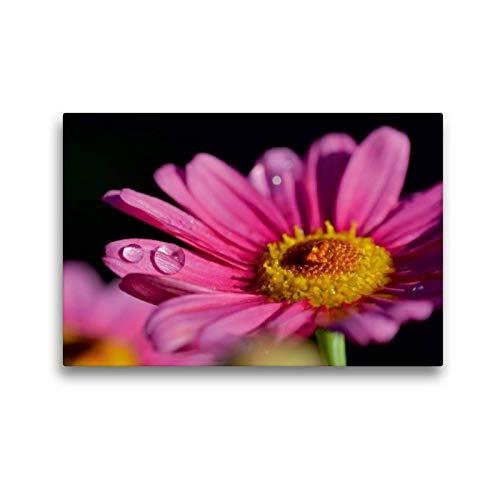 Calvendo Margarita de Color Rosa, 45x30 cm