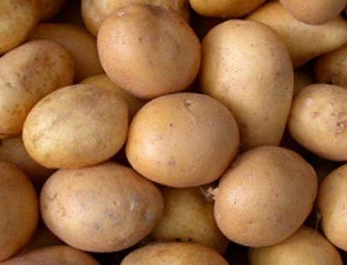 AGROBITS TATO Revansh orgánico Vegano ucraniano (Tuberosum)